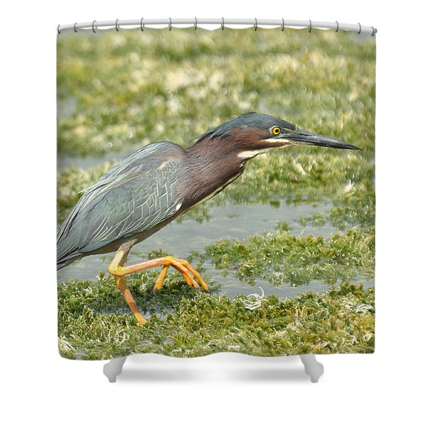 Still Looking Shower Curtain
