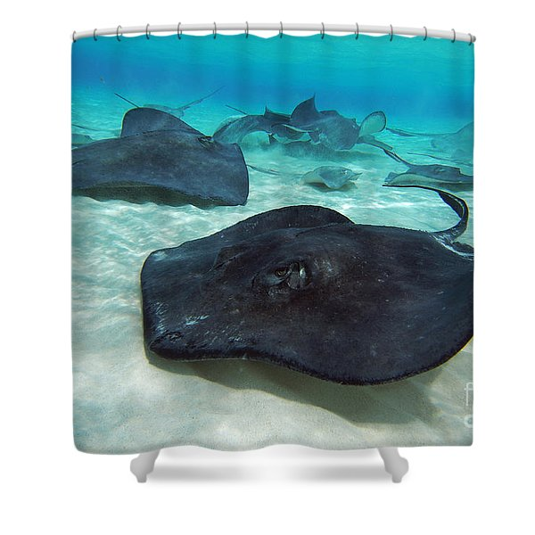 Stingrays Shower Curtain