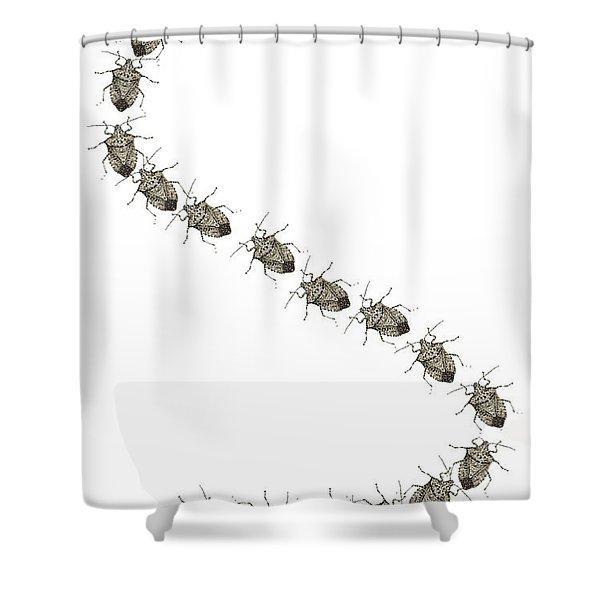 Stink Bugs I Phone Case Shower Curtain