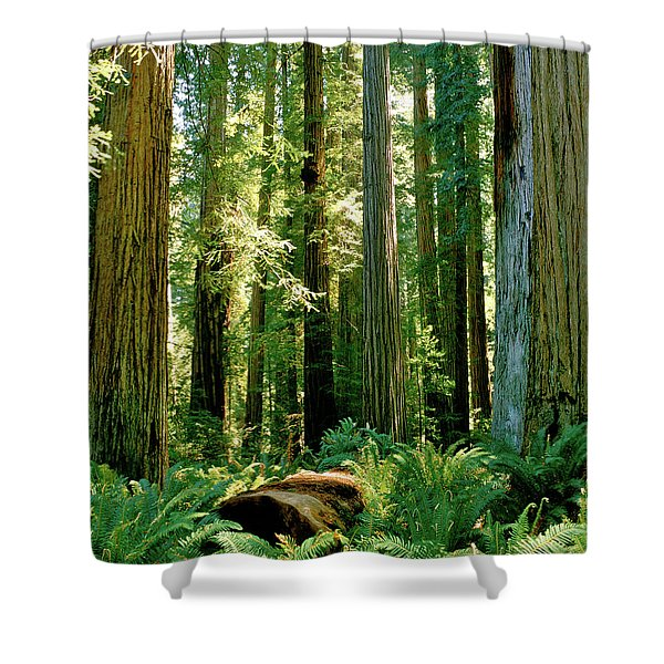 Stout Grove Coastal Redwoods Shower Curtain