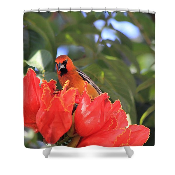 Streak-backed Oriole Shower Curtain