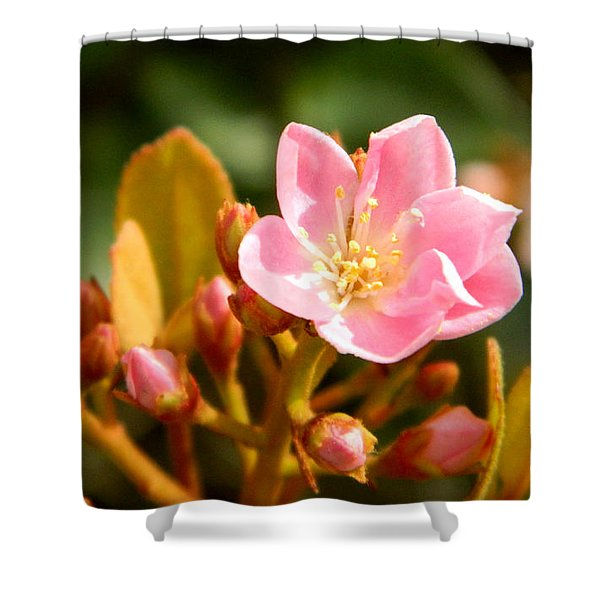Street Flower Shower Curtain