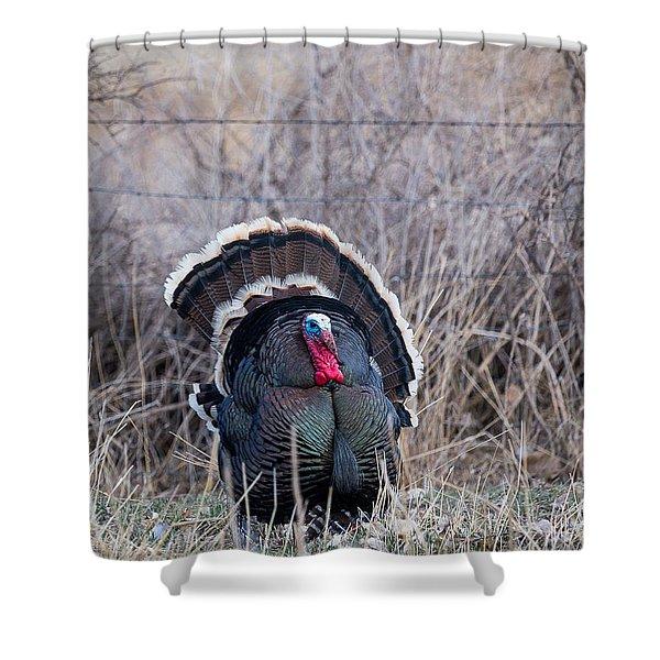 Strutting Turkey Shower Curtain