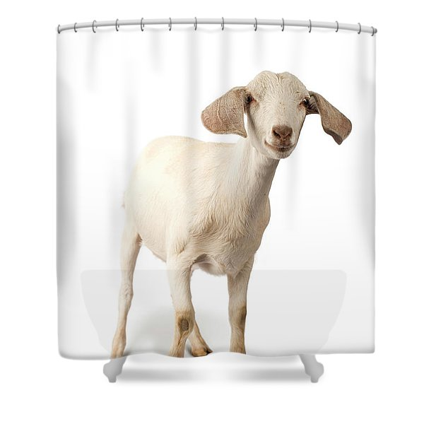 Studio Portrait Of A Mixed-breed Goat Shower Curtain