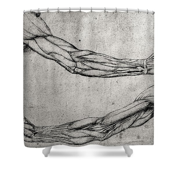 Study Of Arms Shower Curtain