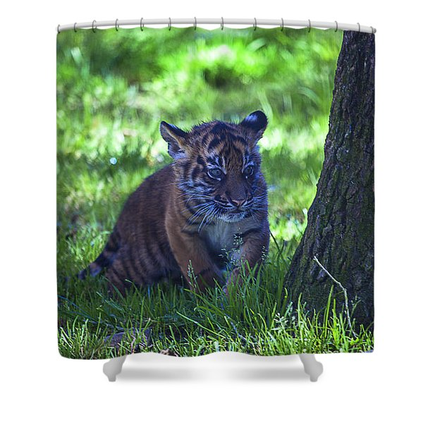 Sumatran Tiger Cub Shower Curtain