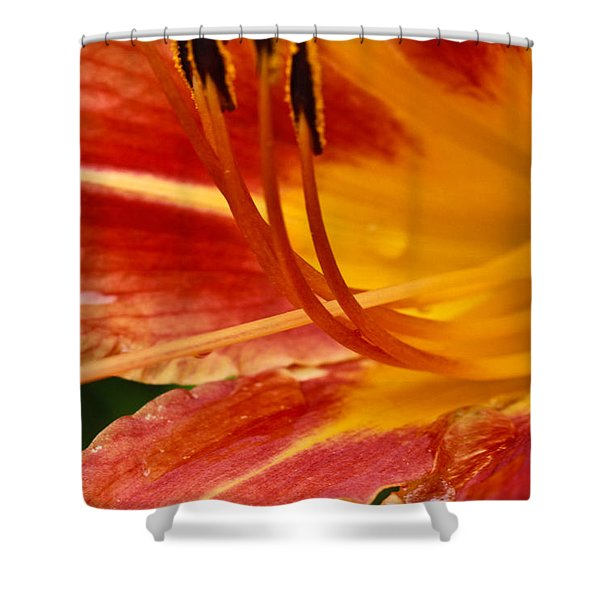 Summer Daylily Shower Curtain