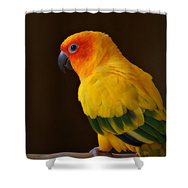 Sun Conure Parrot Shower Curtain