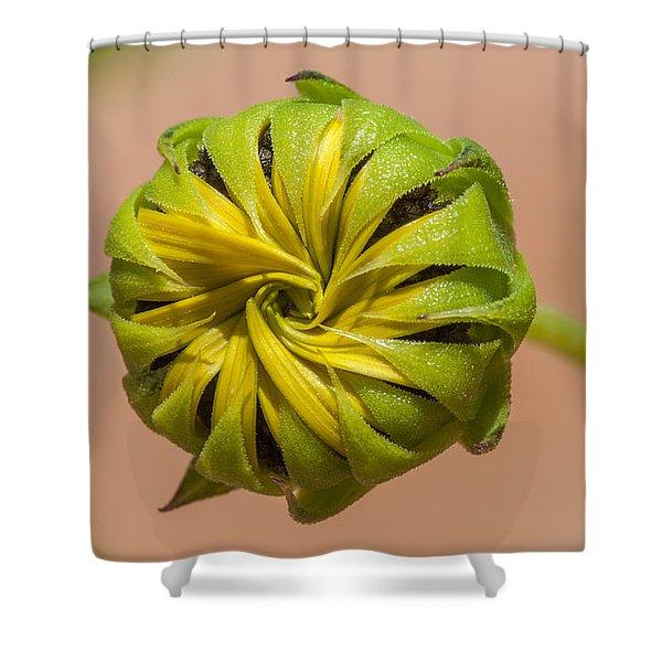 Sunflower Bud Opening Shower Curtain