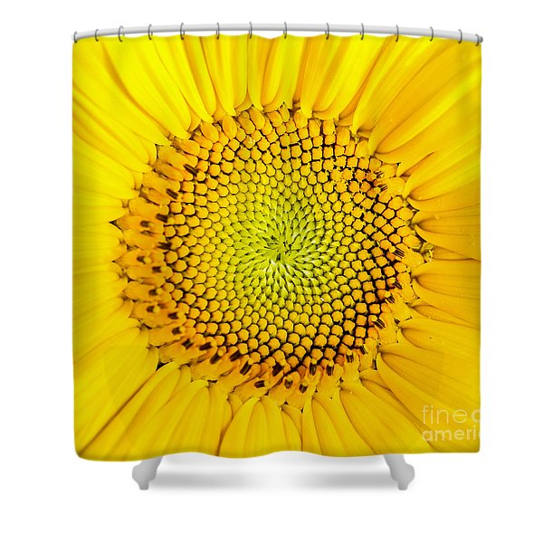 Shower Curtain featuring the photograph Sunflower  by Edward Fielding