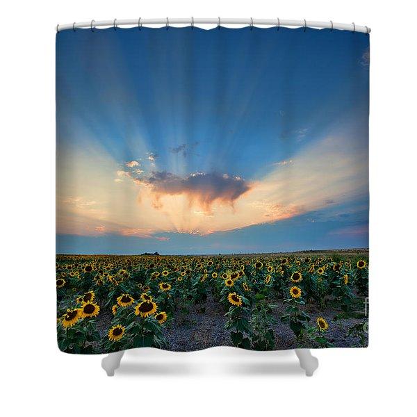 Sunflower Field At Sunset Shower Curtain