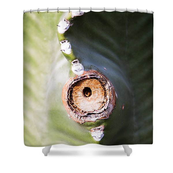 Shower Curtain featuring the photograph Sunlight Split On Cactus Knot by John Wadleigh