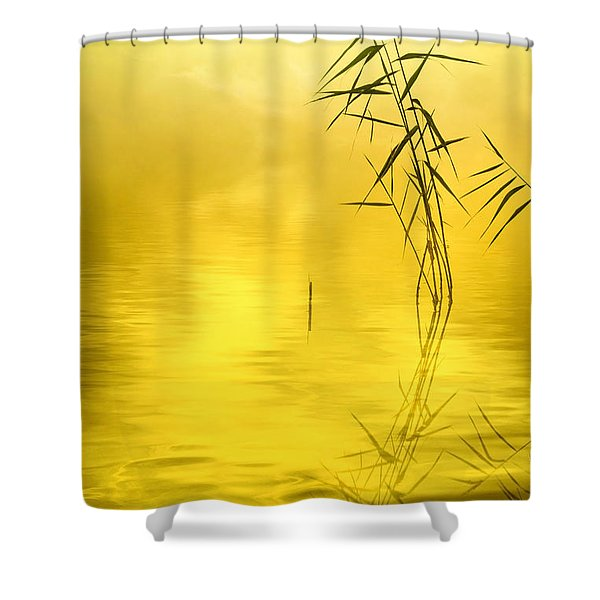 Sunlight Shower Curtain