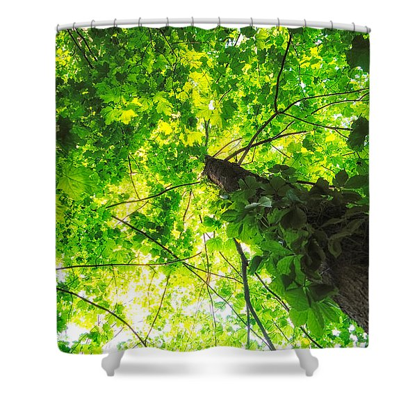 Sunlit Leaves Shower Curtain