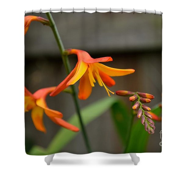 Shower Curtain featuring the photograph Sunny Crocosmia by Scott Lyons