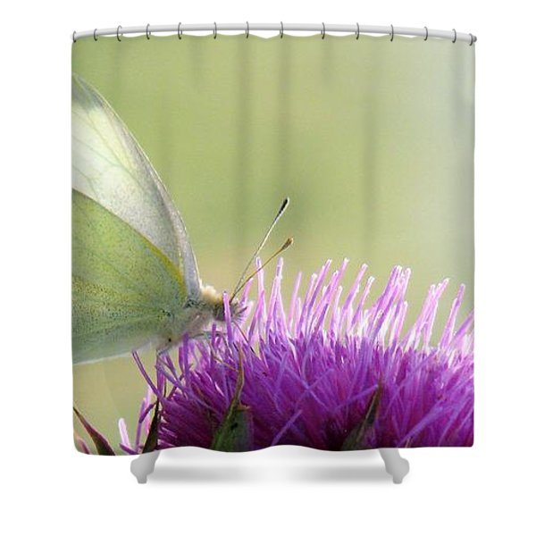 Sunrise In The Thistle Fields Shower Curtain