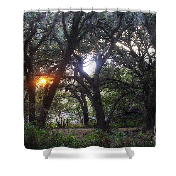 Sunrise Through The Oaks Shower Curtain