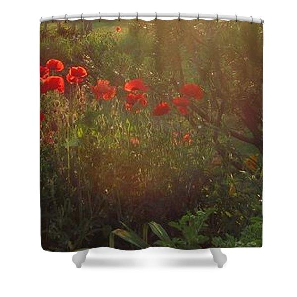 Sunset In The Poppy Garden Shower Curtain