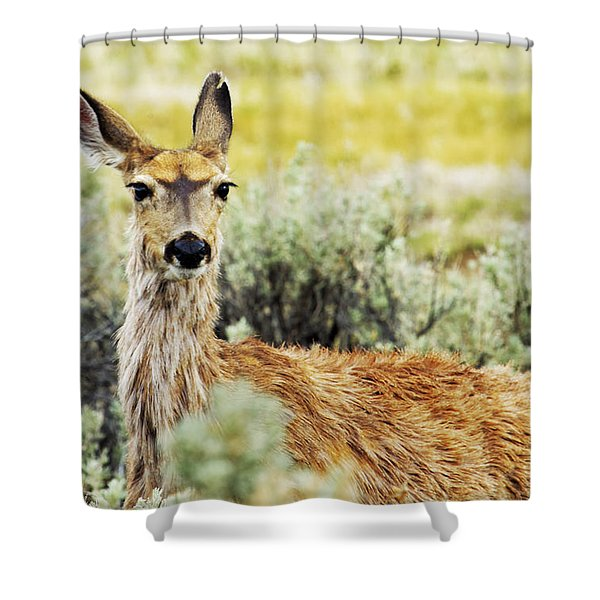 Surround Sound Shower Curtain