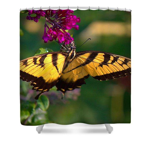 Swallowtail 1 Shower Curtain