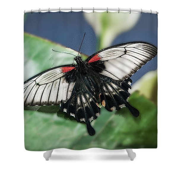 Shower Curtain featuring the digital art Swallowtail Butterfly by Mae Wertz