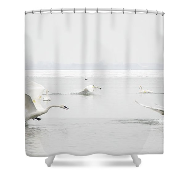 Swan Fight Shower Curtain