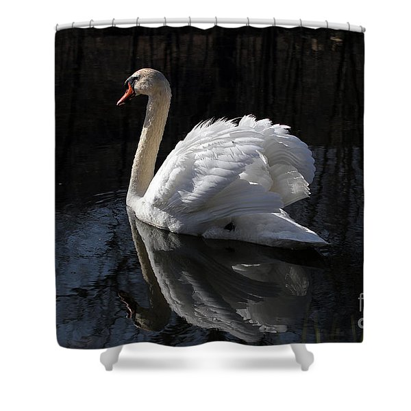 Swan With Reflection  Shower Curtain
