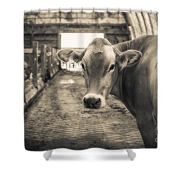 Sweet Alfalfa Shower Curtain