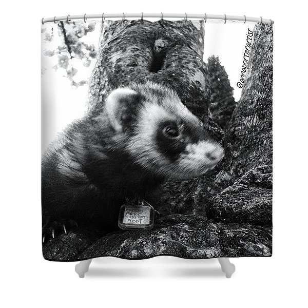 Sweet Little Nicky Chillin In A Tree Shower Curtain