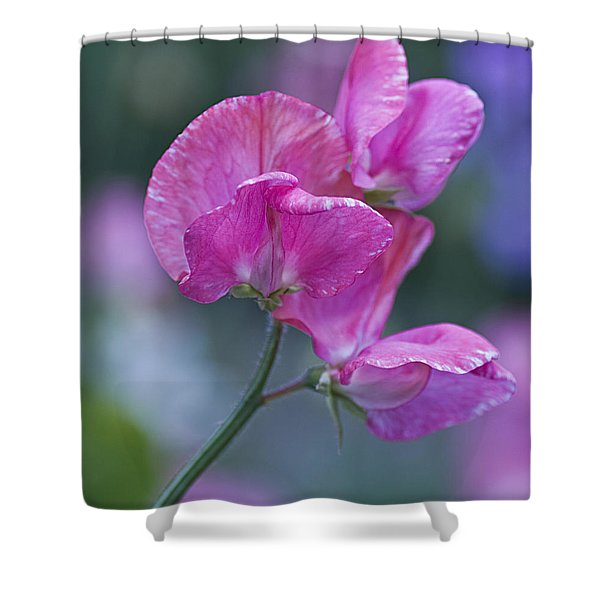 Sweet Pea In Pink Shower Curtain