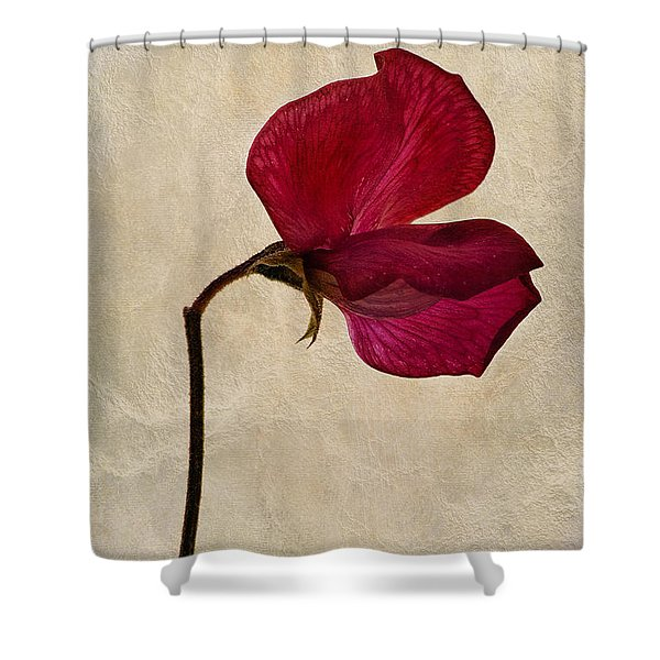 Sweet Textures Shower Curtain