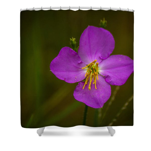 Sweetly Shower Curtain