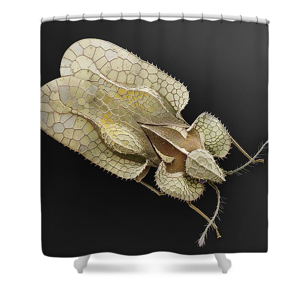Sycamore Lace Bug Sem Shower Curtain