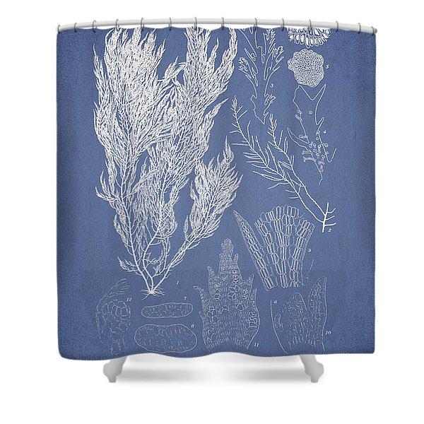 Symphocladia Linearis Shower Curtain