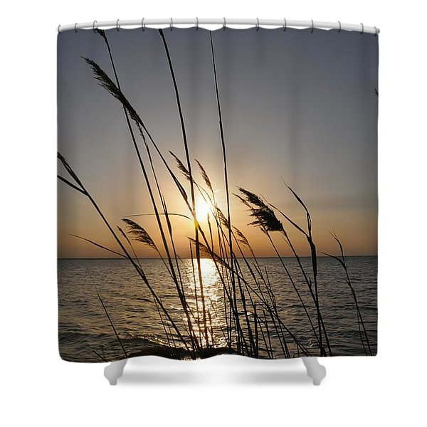 Tall Grass Sunset Shower Curtain