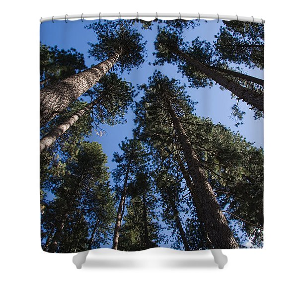 Talls Trees Yosemite National Park Shower Curtain