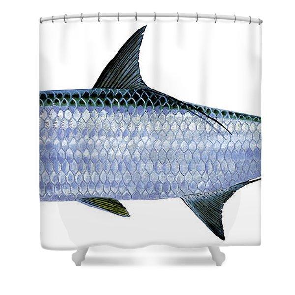 Tarpon Shower Curtain