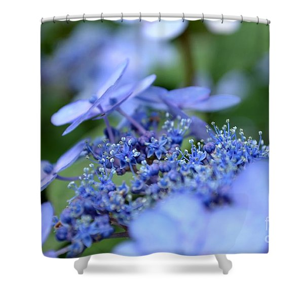 Shower Curtain featuring the photograph Taube Lacecap Hydrangea by Scott Lyons