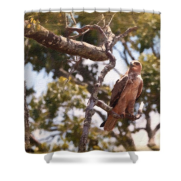 Shower Curtain featuring the photograph Tawny Eagle by Perla Copernik