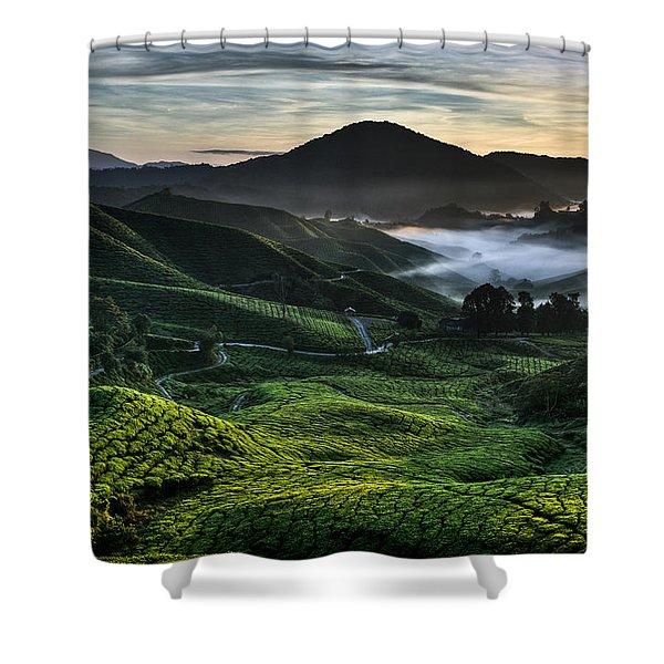 Tea Plantation At Dawn Shower Curtain