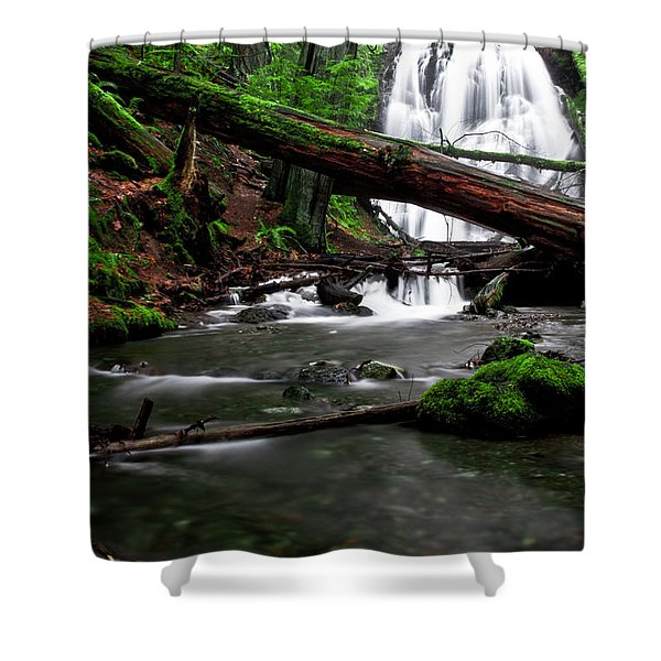 Temperate Old Growth Shower Curtain