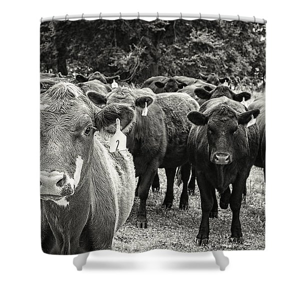 Tennessee Cattle Shower Curtain