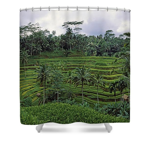 Terraced Rice Field, Bali, Indonesia Shower Curtain
