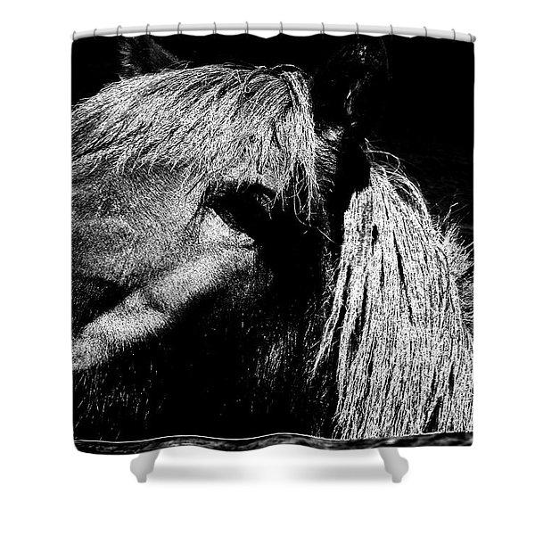 Teton Horse Shower Curtain