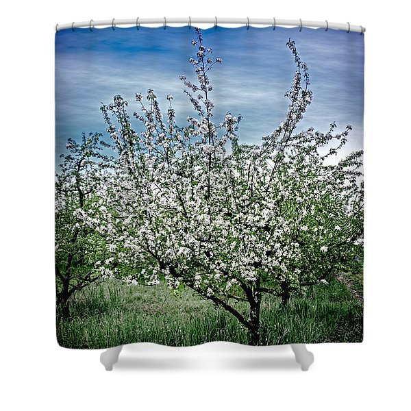 The Apple Tree Blooms Shower Curtain