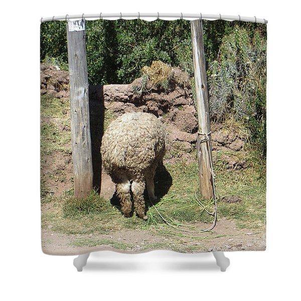 The Bashful Llama Shower Curtain