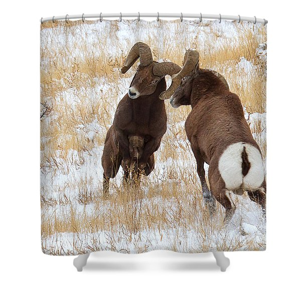 The Battle For Dominance Shower Curtain