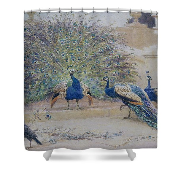 The Borrowed Plume Shower Curtain