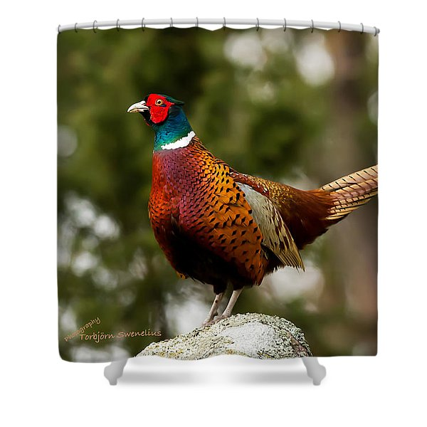 The Cock On Top Of The Rock Shower Curtain
