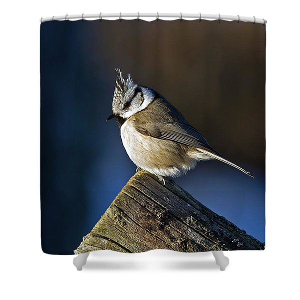 The Crested Tit In The Sun Shower Curtain